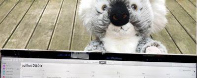 banner blog echeances koala test